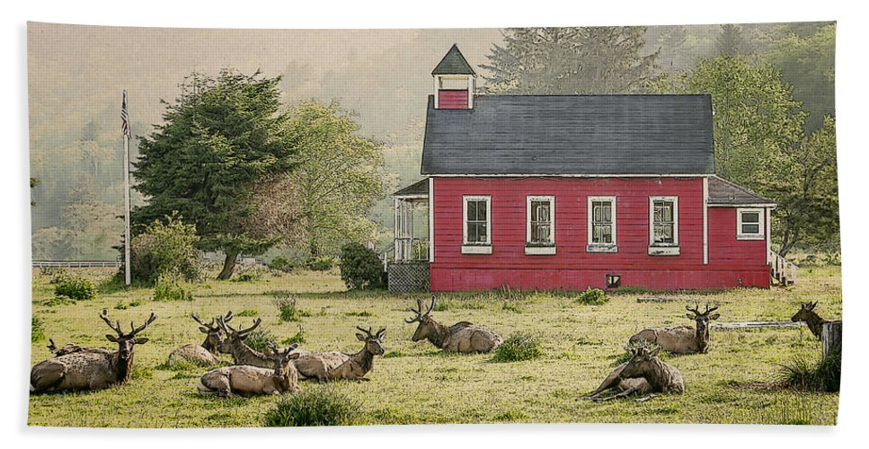 Cervus Canadensis Hand Towel featuring the photograph Elk In The School Yard by John Trax