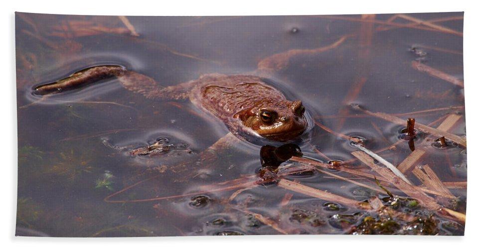Finland Bath Sheet featuring the photograph European Common Brown Frog by Jouko Lehto