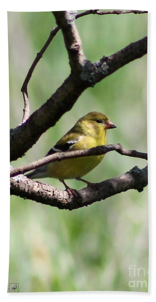 American Goldfinch Hand Towel featuring the photograph Female American Goldfinch by J McCombie