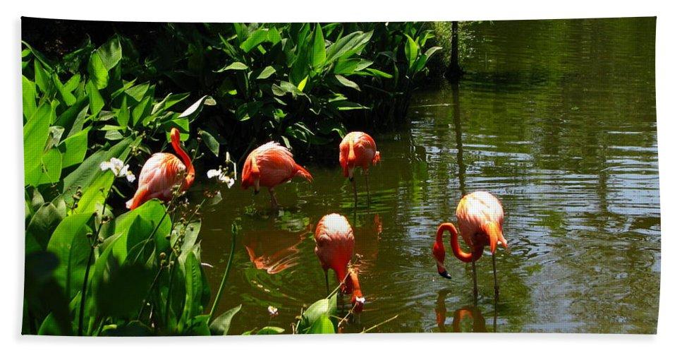 Flamingos Bath Sheet featuring the photograph Flamingos by Greg Patzer