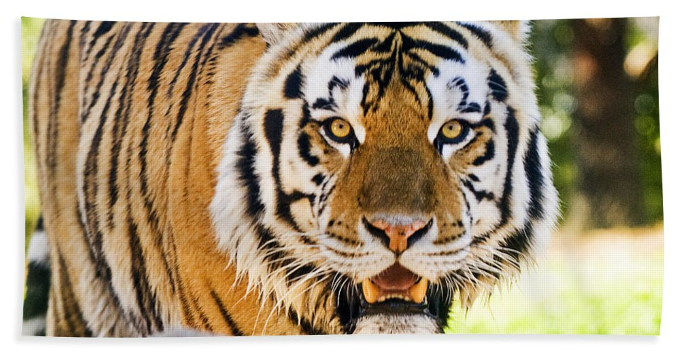Majesty Bath Sheet featuring the photograph His Majesty by Scott Pellegrin