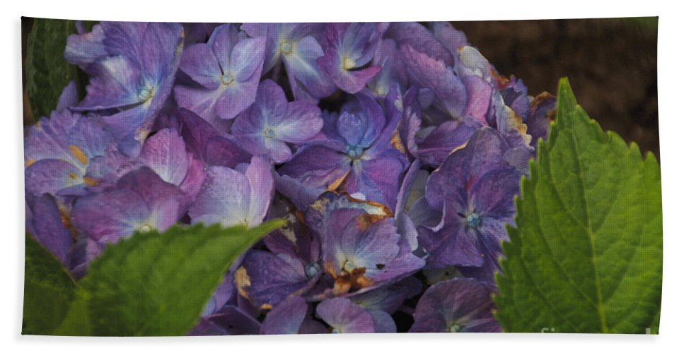 Hydrangea Bath Sheet featuring the photograph Hydrangea by William Norton