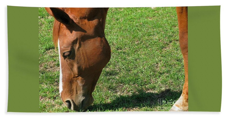 Horse Hand Towel featuring the photograph In Green Pasture by Ann Horn