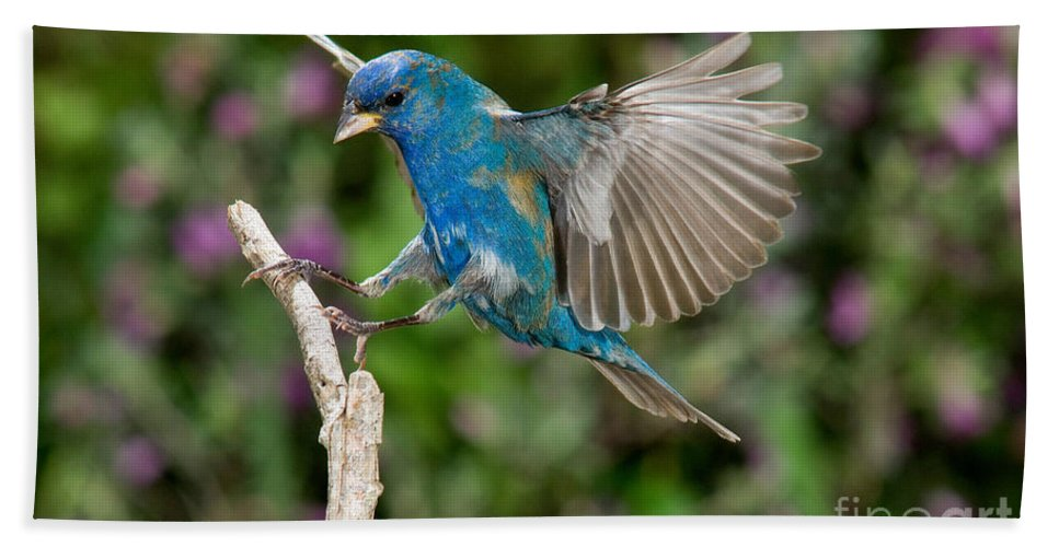 Fauna Hand Towel featuring the photograph Indigo Bunting by Anthony Mercieca