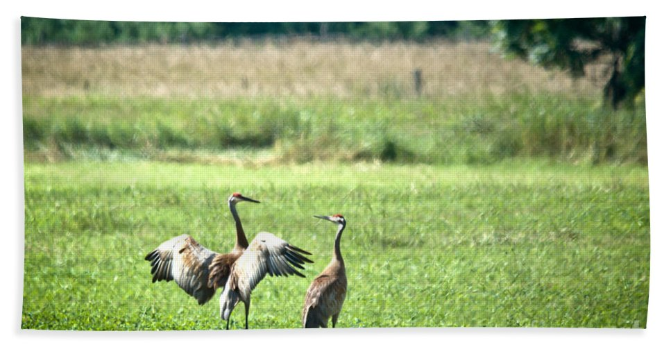 Sandhill Cranes Hand Towel featuring the photograph It Was This Big by Cheryl Baxter