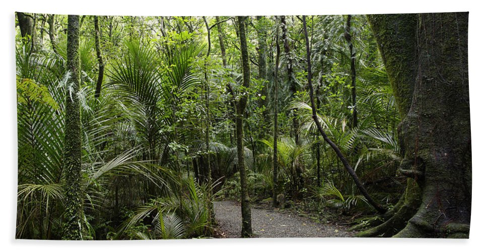 New Zealand Bath Sheet featuring the photograph Jungle Trail by Les Cunliffe
