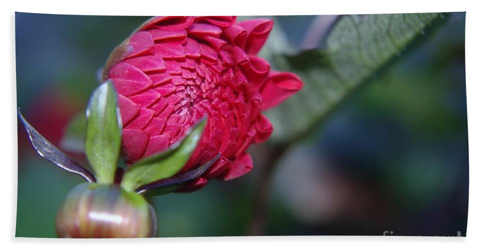 Flowers Bath Sheet featuring the photograph Just Before The Bloom by Jeff Swan