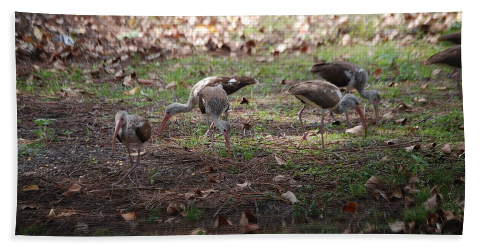 Digging For Bugs Hand Towel featuring the photograph Juvenile Ibis by Robert Floyd
