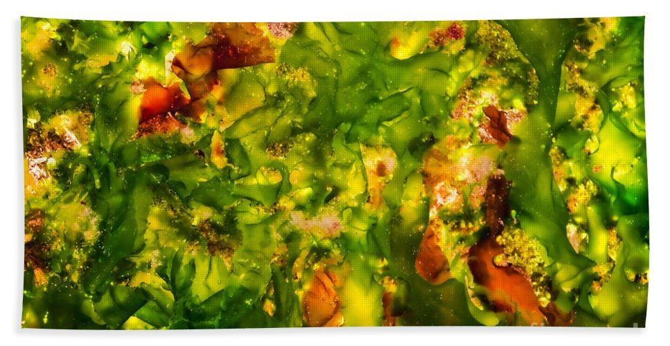 Algae Bath Sheet featuring the photograph Kelp Forest by Venetta Archer