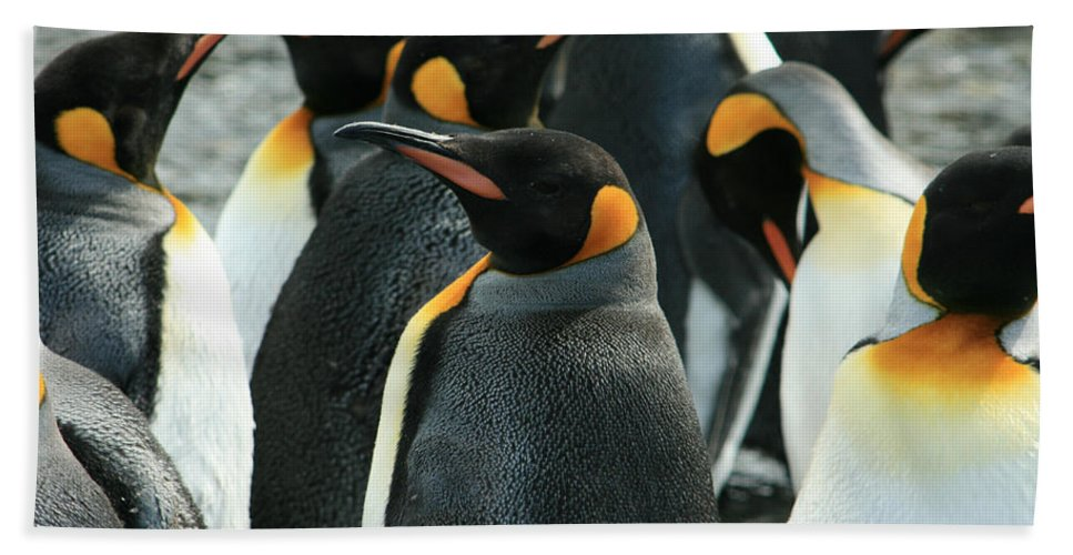 Colony Of Penguins Hand Towel featuring the photograph King Penguin Colony by Amanda Stadther