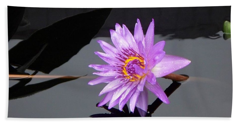 Lavender Bath Sheet featuring the photograph Lavender Lily by Eric Schiabor