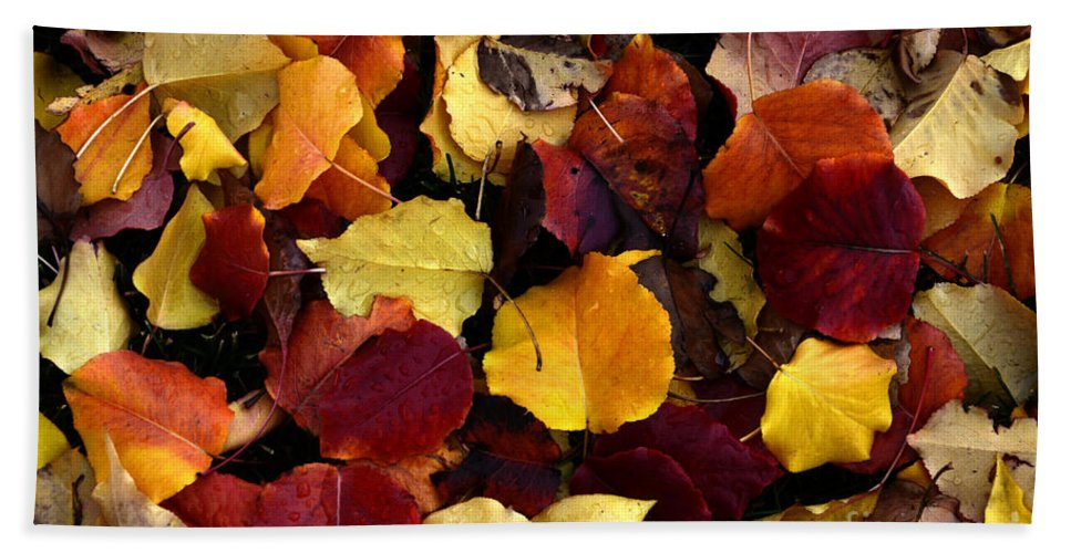 Leaves Hand Towel featuring the photograph Leaves Of Autumn by Bob Christopher