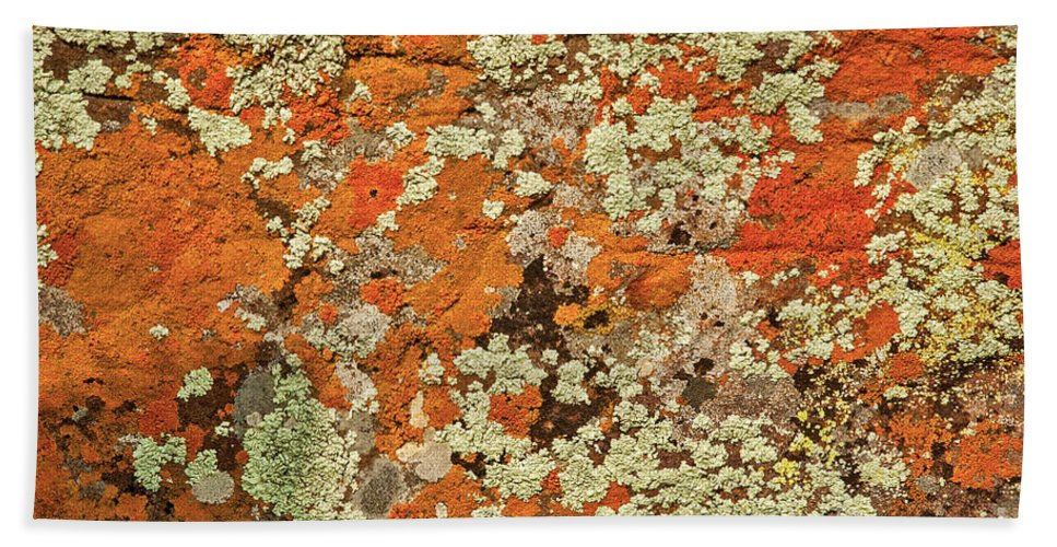 Lichen Abstract In Orange Color Hand Towel featuring the photograph Lichen Abstract by Mae Wertz