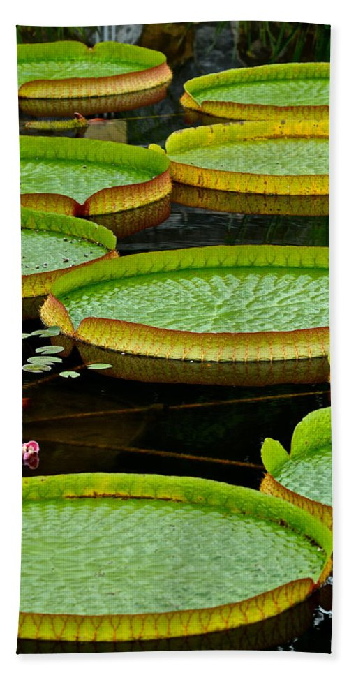 Lily Hand Towel featuring the photograph Lilly Pads by Frozen in Time Fine Art Photography