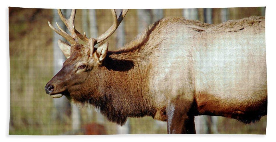 Male Elk Bath Sheet featuring the photograph Male Elk by Crystal Wightman