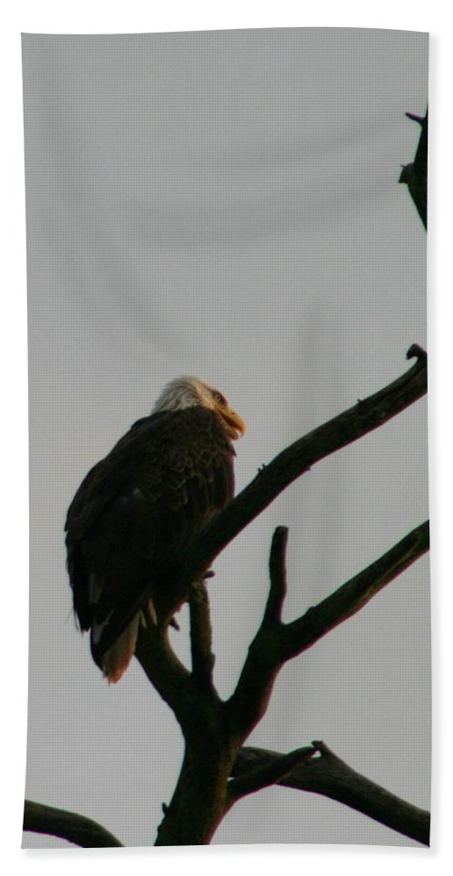 American Blad Eagle Hand Towel featuring the photograph Looking Up To Bald Eagle's by Neal Eslinger