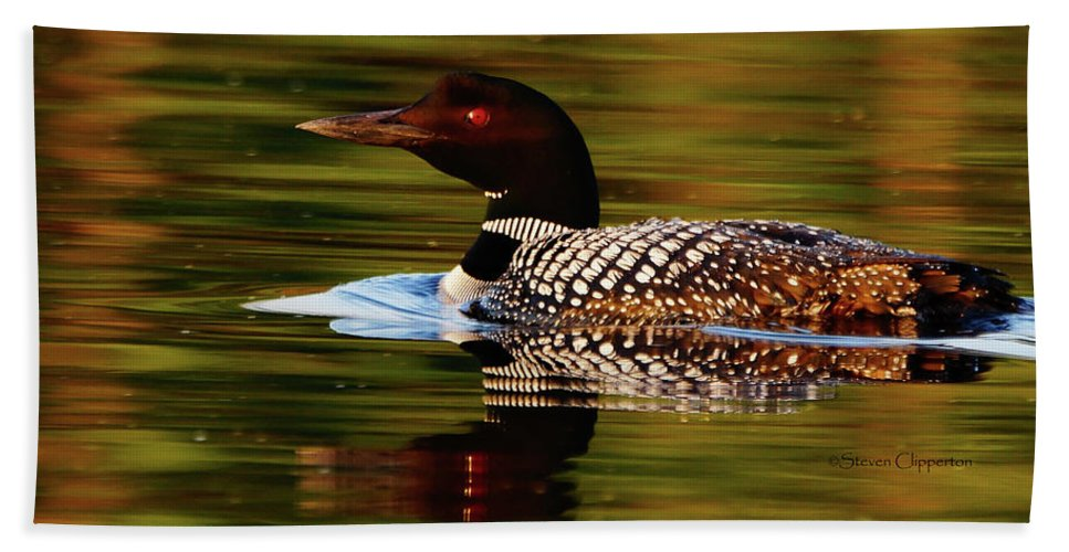 Loon Bath Sheet featuring the photograph Loon 6 by Steven Clipperton