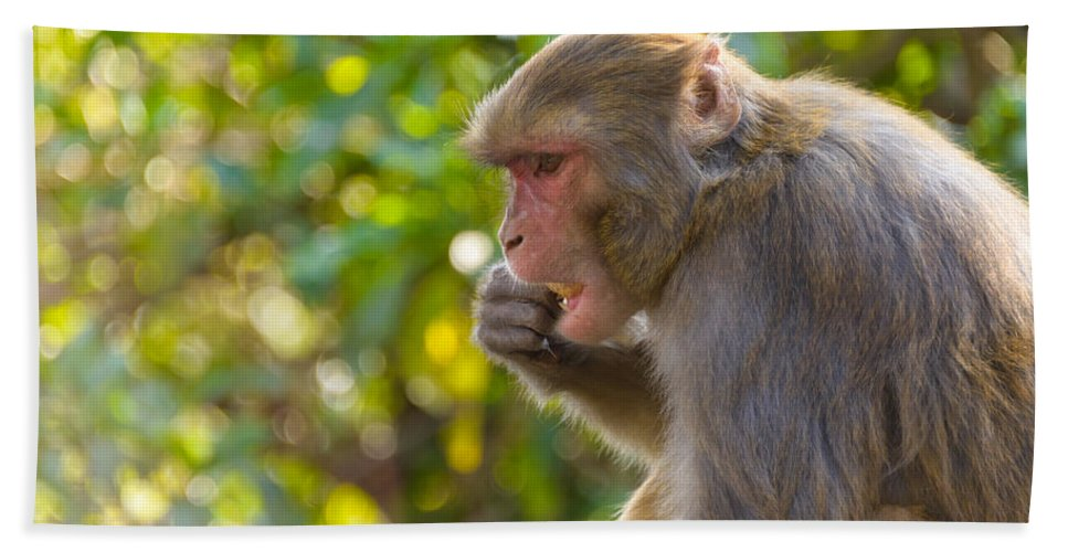 Macaque Hand Towel featuring the photograph Macaque Eating An Orange by Dutourdumonde Photography
