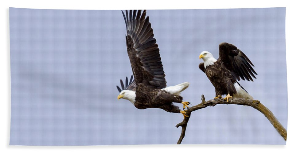 Eagle Bath Sheet featuring the photograph Majestic Beauty 2 by David Lester