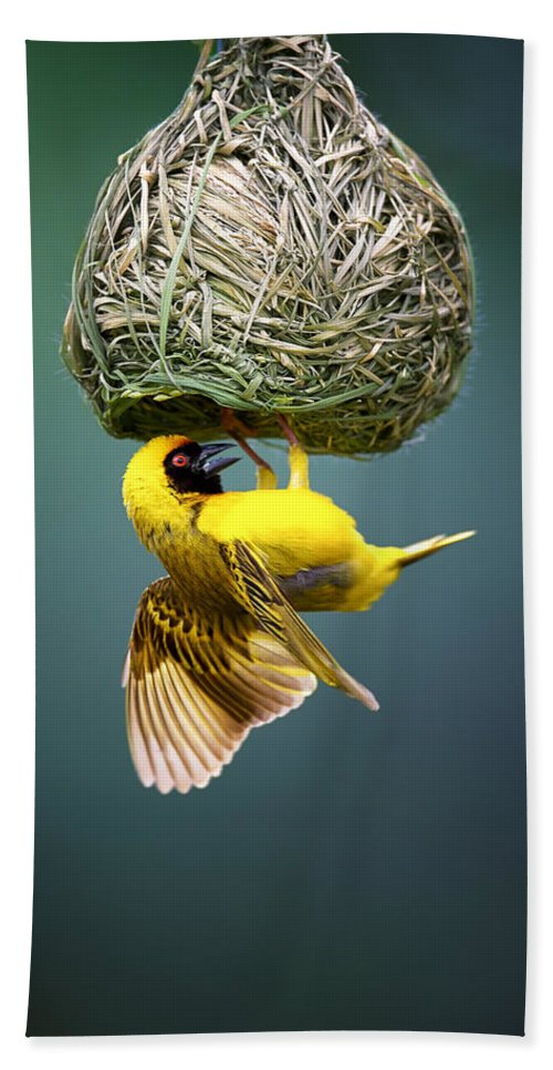 Africa Hand Towel featuring the photograph Masked Weaver At Nest by Johan Swanepoel