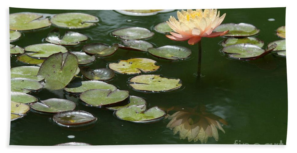 Waterlily Bath Sheet featuring the photograph Memories Of Summer by Christiane Schulze Art And Photography