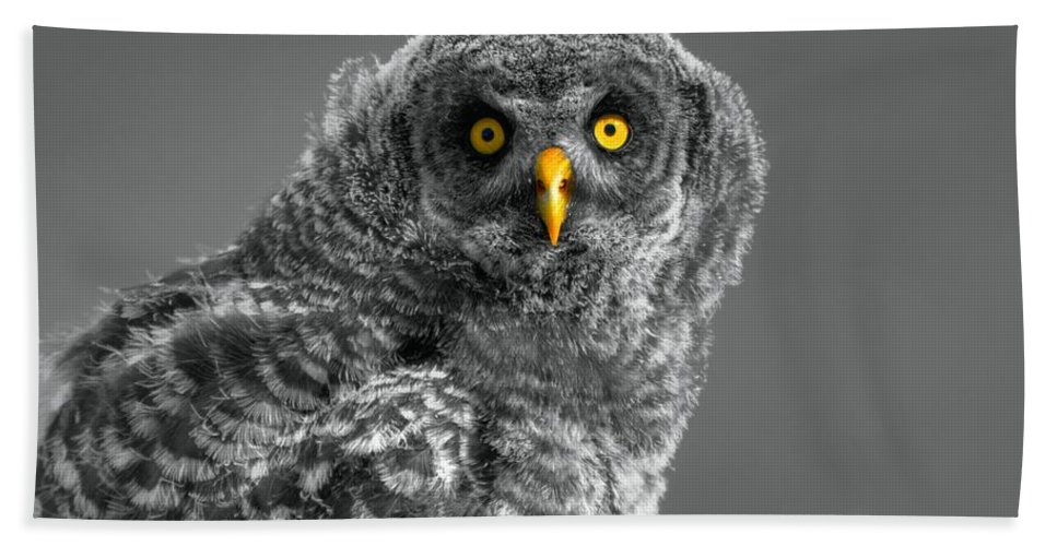 Ghost Forest Hand Towel featuring the photograph Mesmerized by James Anderson