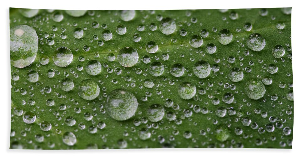Dew Hand Towel featuring the photograph Morning Dew by Chevy Fleet