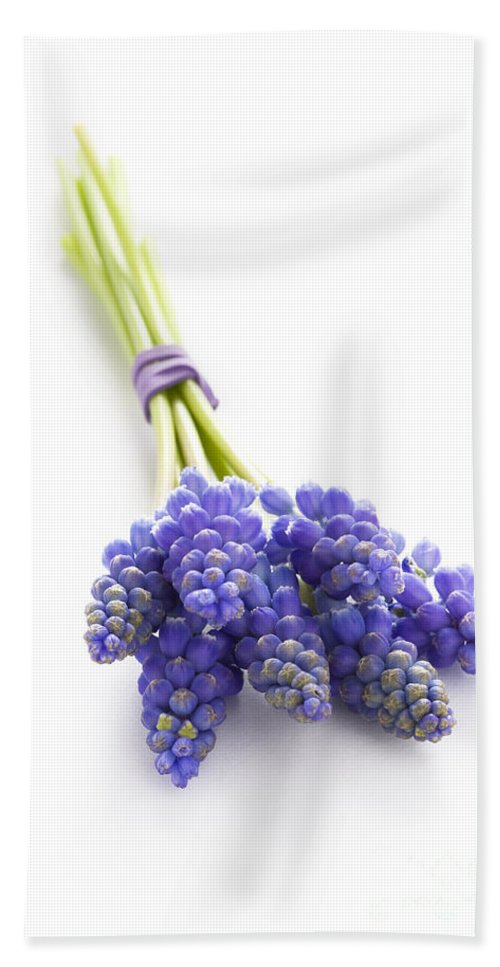 Muscari Hand Towel featuring the photograph Muscari Or Grape Hyacinth by Lee Avison