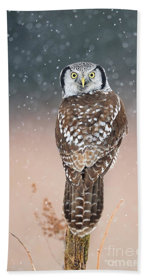 Bird Bath Towel featuring the photograph Northern Hawk Owl by Scott Linstead