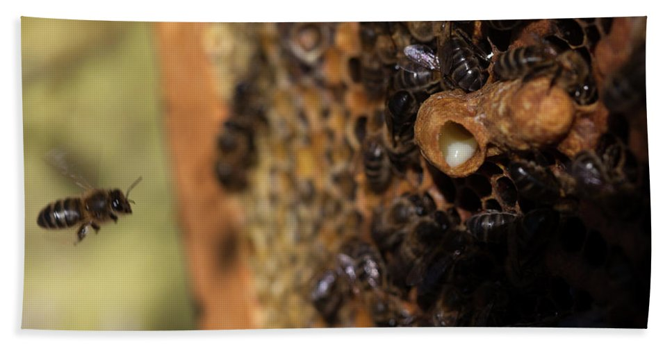 Royal Jelly Bath Towel featuring the photograph Nurse Bees Take Care Of A Queen Bee Egg by Chico Sanchez