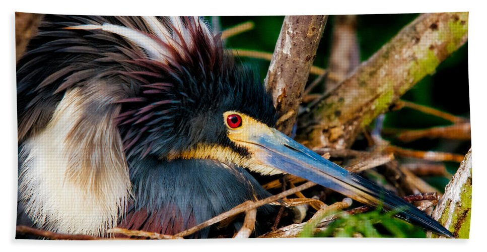 Art Hand Towel featuring the photograph On The Nest by Christopher Holmes