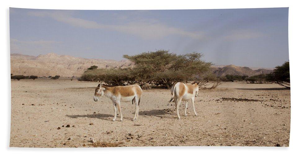 Wildlife Hand Towel featuring the photograph Onager Equus Hemionus by Eyal Bartov