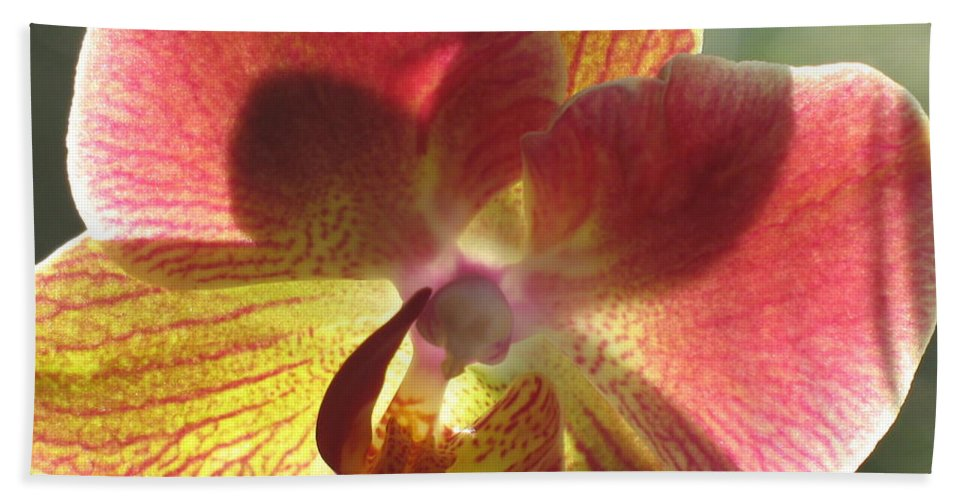 Orchid Bath Sheet featuring the photograph Orchid by Christiane Schulze Art And Photography