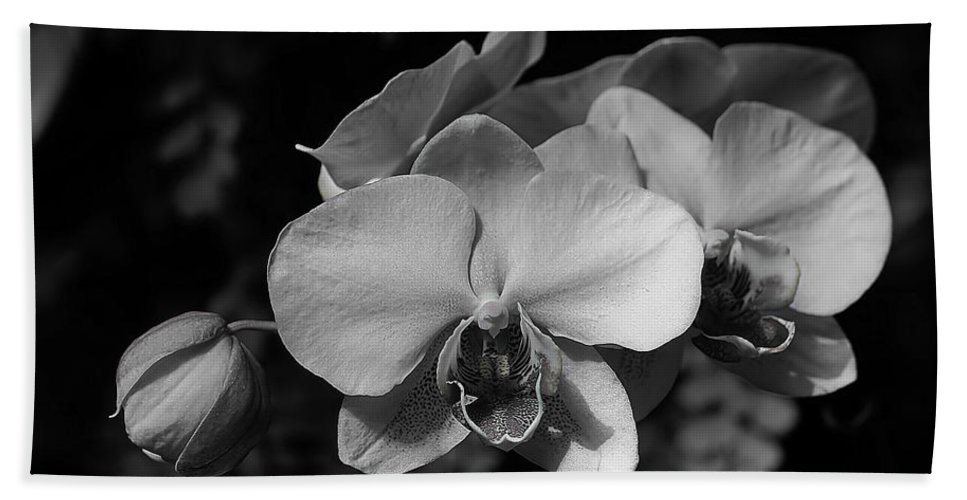 Orchids Bath Sheet featuring the photograph Orchids by Joyce Baldassarre