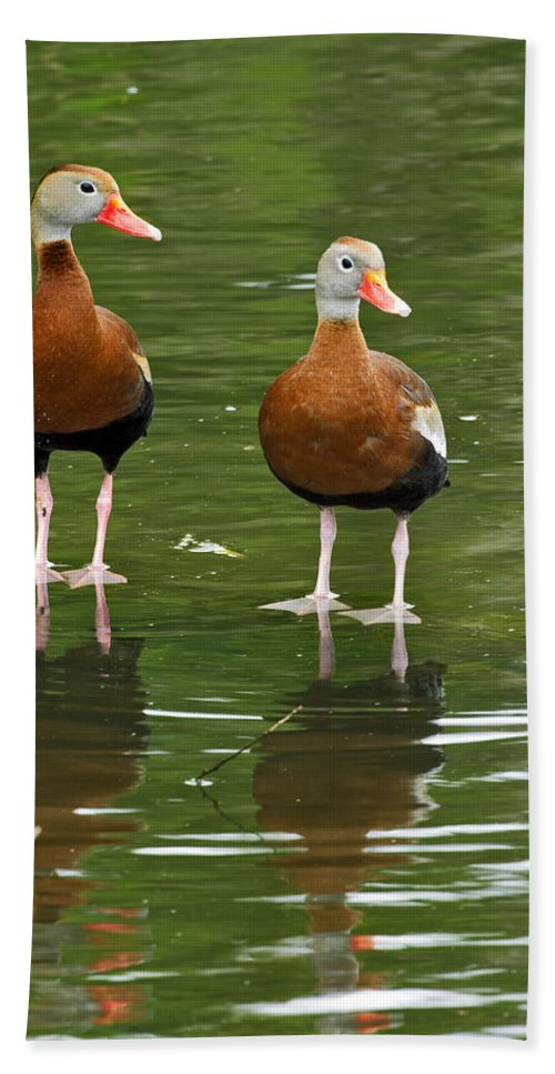 Black Hand Towel featuring the photograph Pair Black-bellied Whistling-ducks by Gary Langley