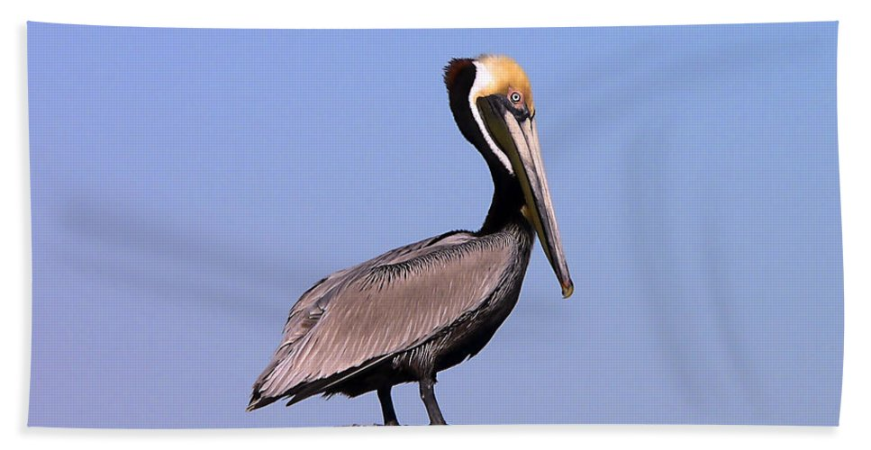 Pelican Bath Sheet featuring the photograph Pelican Perch by Al Powell Photography USA