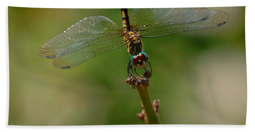 Dragonfly Bath Sheet featuring the photograph 2 Peter 3 Verse 15 by Leticia Latocki