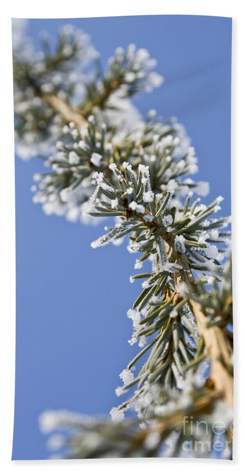 Close Hand Towel featuring the photograph Pine Tree Branch by Dan Radi