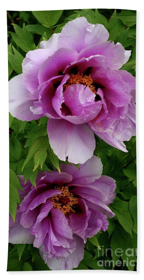 Peony Bath Sheet featuring the photograph Pink Peonies by Christiane Schulze Art And Photography