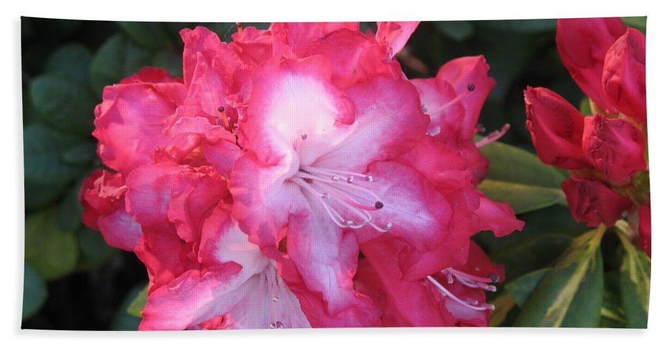 Rhododendron Bath Sheet featuring the photograph Pink Rhododendron by Christiane Schulze Art And Photography