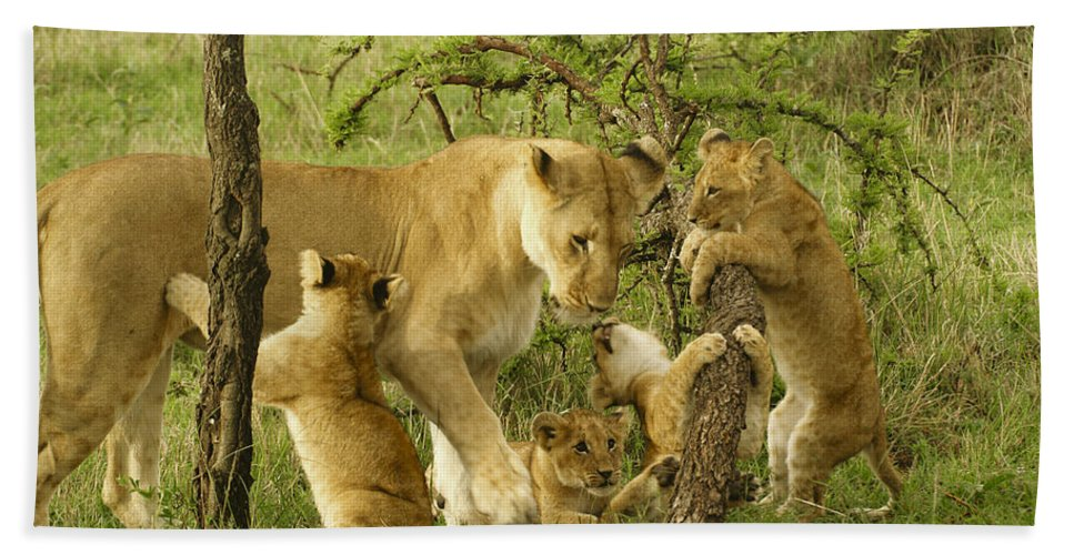 Lion Hand Towel featuring the photograph Playing With Mom by Michele Burgess