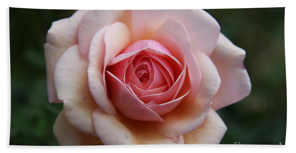 Rose Bath Sheet featuring the photograph Pure Beauty by Christiane Schulze Art And Photography
