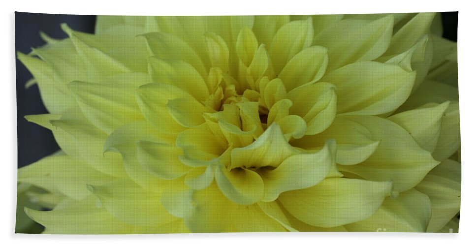 Dahlia Hand Towel featuring the photograph Purity by Christiane Schulze Art And Photography