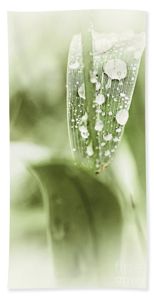 Grass Bath Sheet featuring the photograph Raindrops On Grass by Elena Elisseeva
