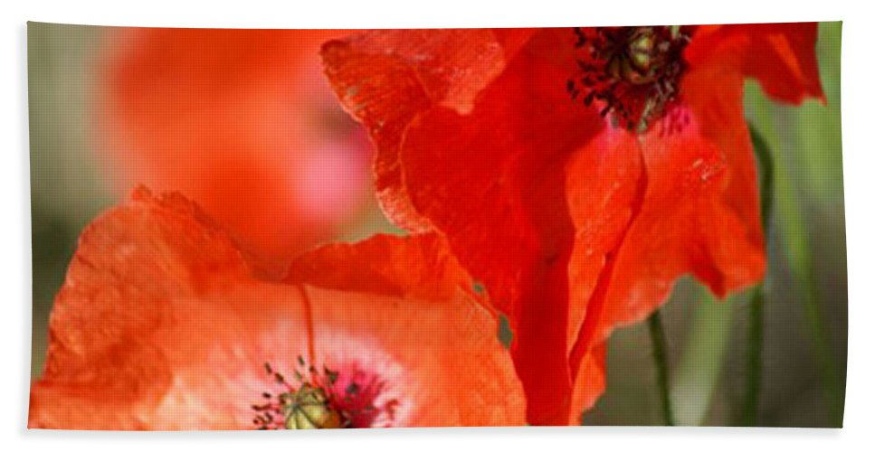 Poppies Bath Towel featuring the photograph Red Poppies by Carol Lynch