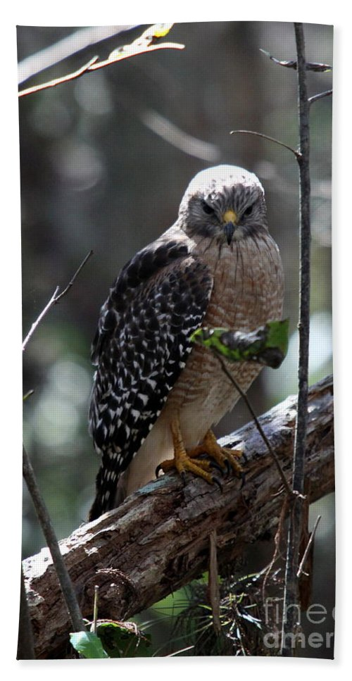 Hawk Hand Towel featuring the photograph Red - Shouldered Hawk II by Christiane Schulze Art And Photography