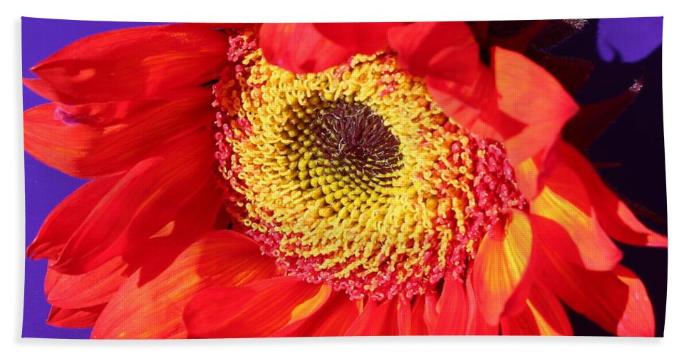 Purple Bath Sheet featuring the photograph Red Sunflower by Kume Bryant