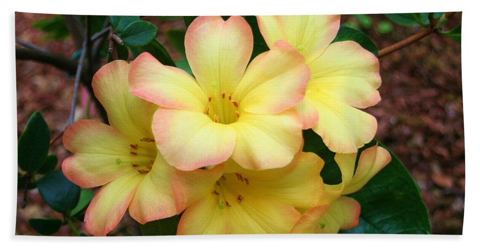 Karen Silvestri Hand Towel featuring the photograph Rhododendron 'toff' by Karen Silvestri