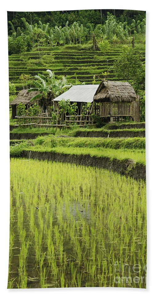 Agriculture Bath Sheet featuring the photograph Rice Fields In Bali Indonesia by Jacek Malipan
