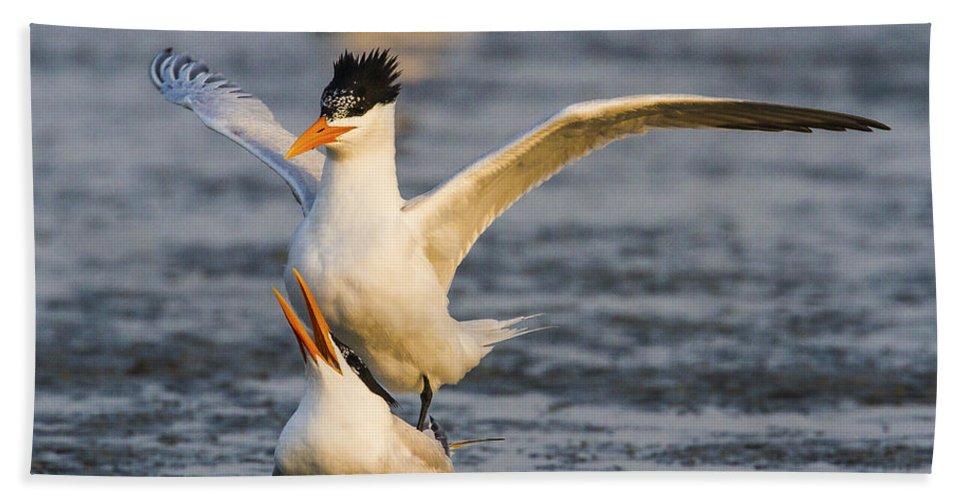 Doug Lloyd Hand Towel featuring the photograph Royal Terns by Doug Lloyd